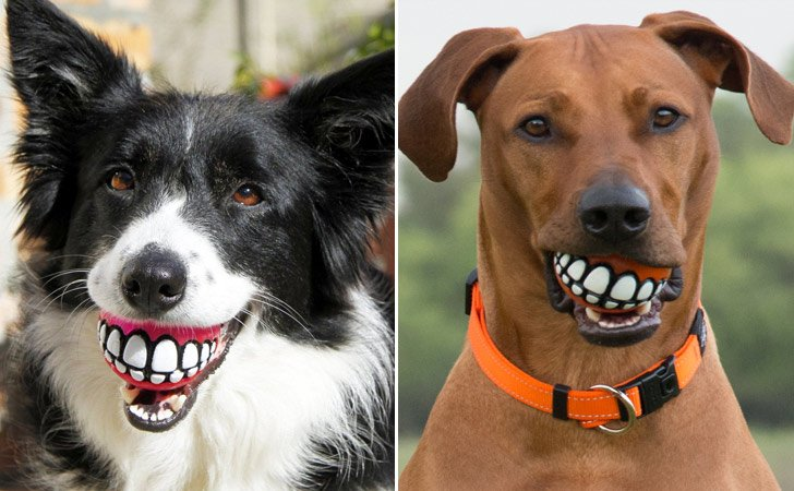 Grinning Teeth Dog Ball