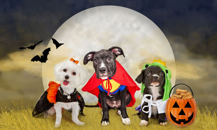 Pet Costumes For Dogs