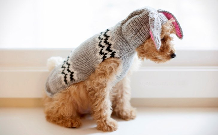 Bunny Knit Sweater For Dogs