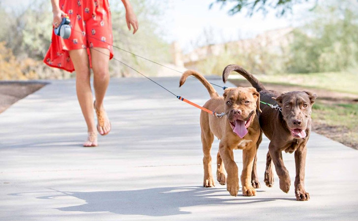 Dual Anti-Tangle Dog Leash