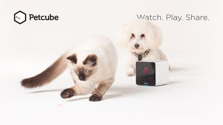 Interactive Laser Pet Camera