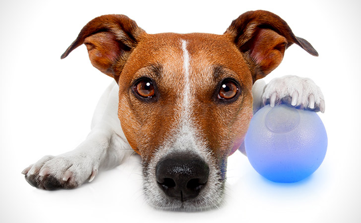 LED Glowing Dog Ball