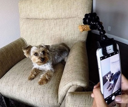 Pet Selfie Smartphone Attachment