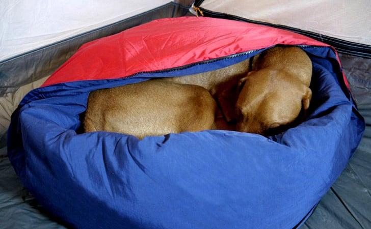 Portable 2-in-1 Dog Sleeping Bag