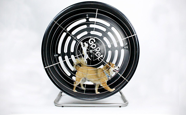 Running Tread Wheel For Small Dogs