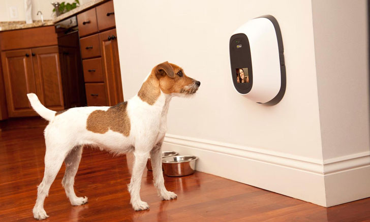 coolest dog gadgets