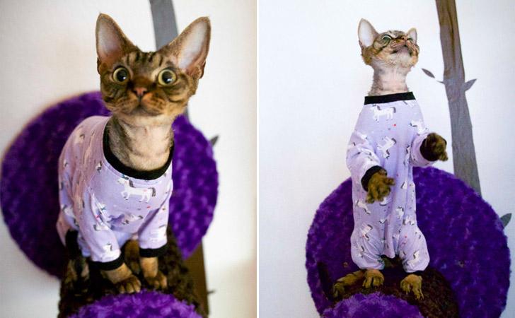 "Adorable Unicorn Cat Pajamas - ""The Feline Foursie"""
