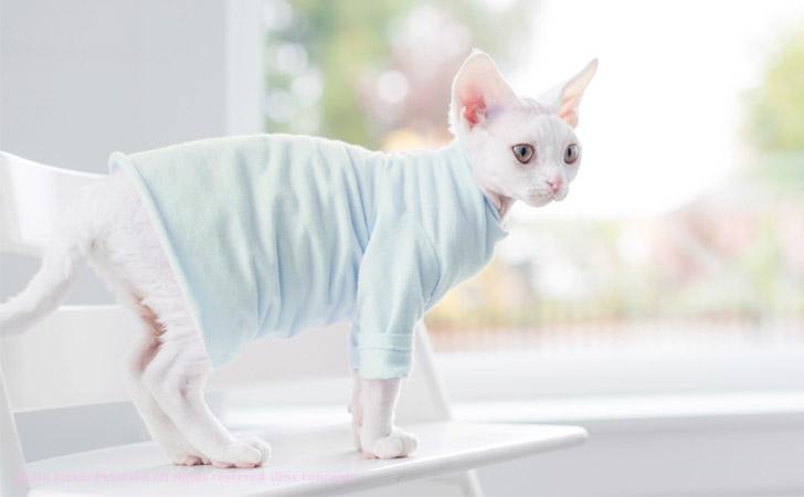 Charming Soft & Comfortable Pastel Cat T-Shirt