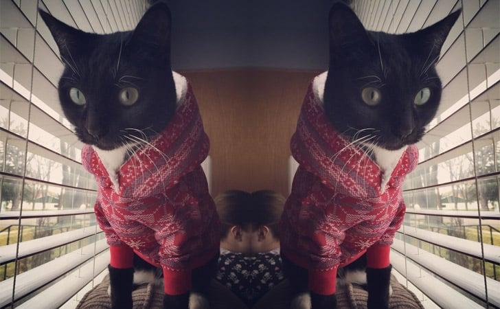 Fair Isle Cat Hoodie