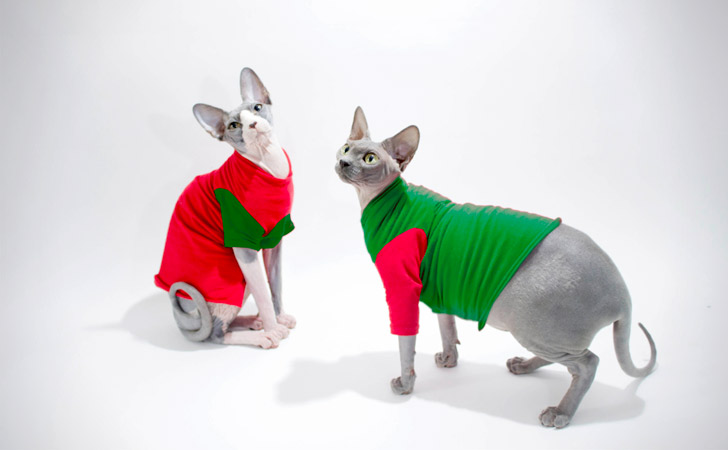 Green & Red Christmas Cat Sweaters