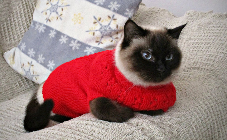 Hand Knit Cat Jumpers