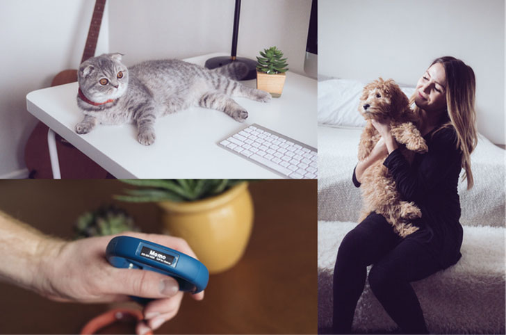 Multi-Function Smart Pet Collar