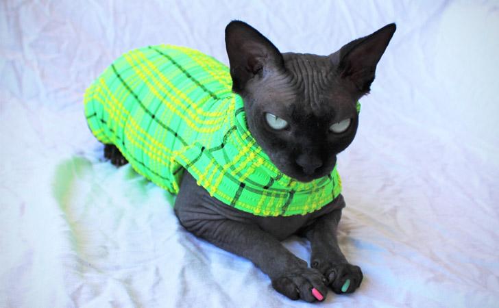 Neon Chequered Seersucker Designer Cat Shirt