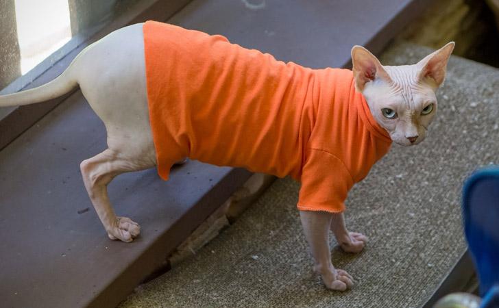Orange Delicious Cat T-Shirt