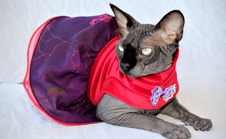Pink Purple Bambino Cat Dress