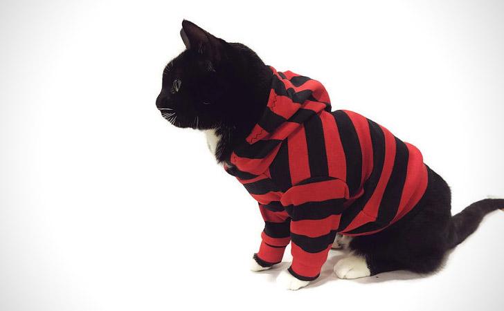 Red & Black Striped Cat Hoodie