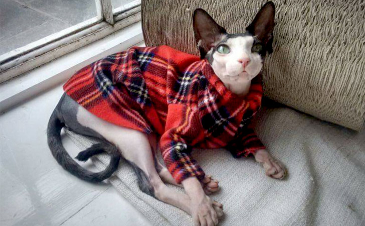 Red Plaid Lumberjack Cat Jacket