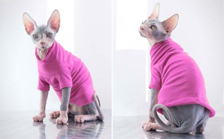 Sphinx Cat Charming T-Shirt
