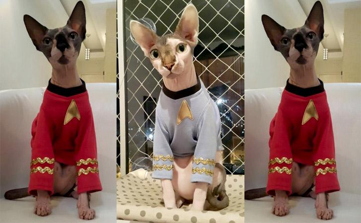 Star Trek Engineer Cat Shirt