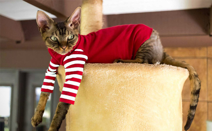 Stripes Red On Red Cat Shirt