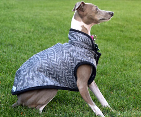 Stylish Custom Dog Clothes