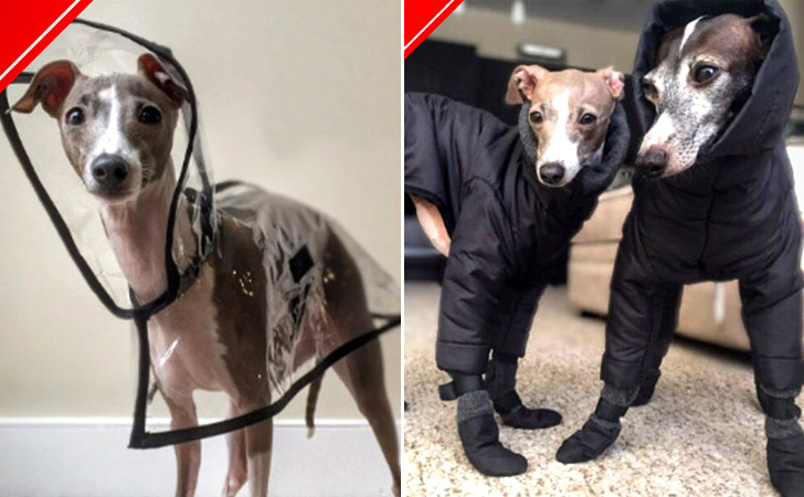 Stylish Custom Dog Clothes