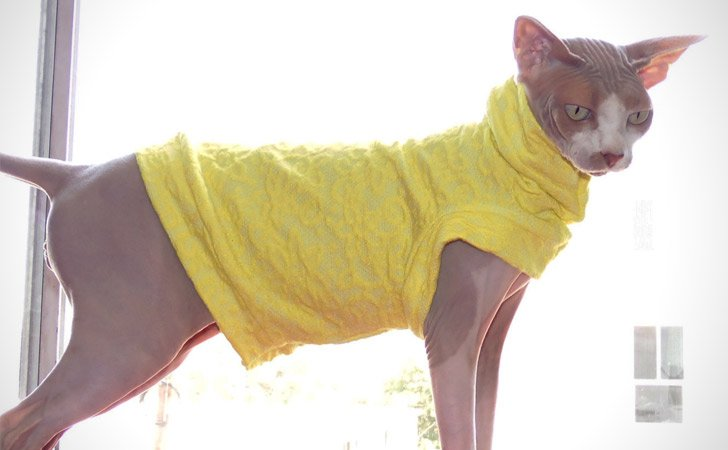 Sunny-Side-Up Designer Cat Shirt