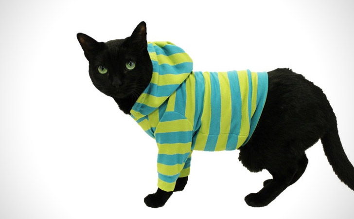 Turquoise And Lime Striped Cat Hoodie