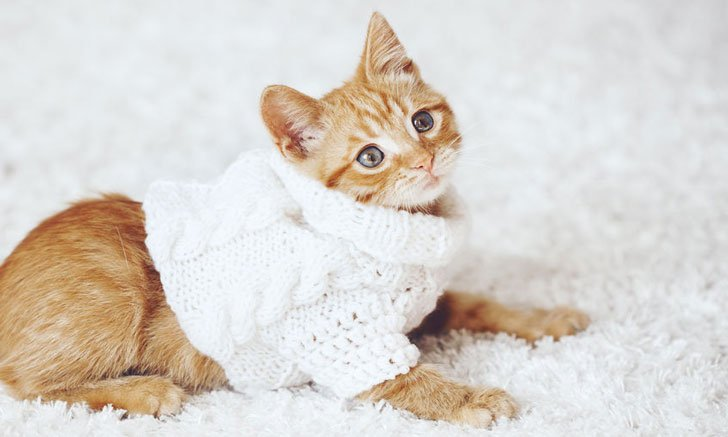 Cat Clothes Cotton Pet Cat Clothing for Small Cats Costume Kitten Outfit Winter Christmas Cats