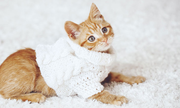 cat clothing