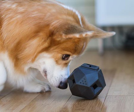 Odin Dog Puzzle Toy