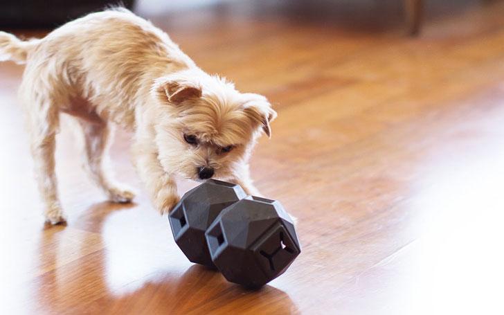 Odin Dog Puzzle Toy