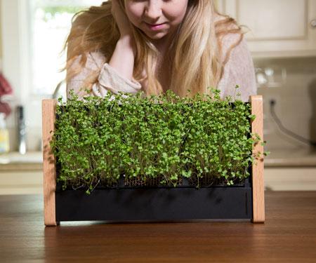 EcoQube Frame Vertical Gardens