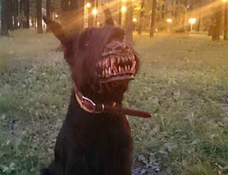 Werewolf Dog Muzzles