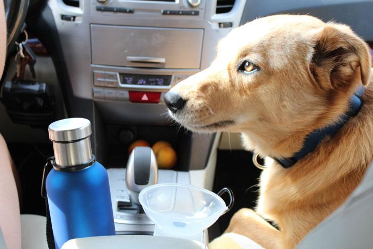 Dog Water Filtration Bottle