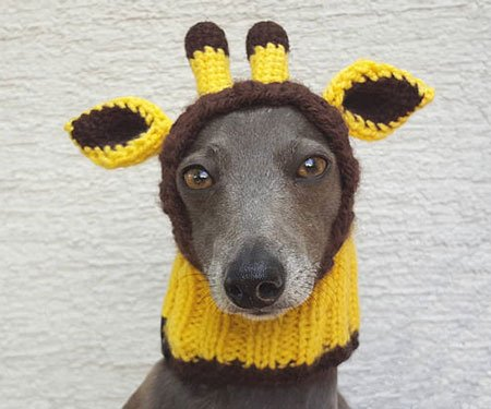 Handmade Dog Hats