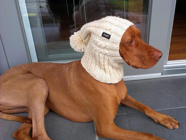 Handmade Dog Hats