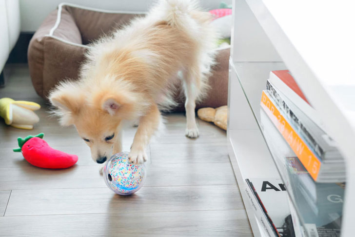 Pebby Smart Ball for Pets