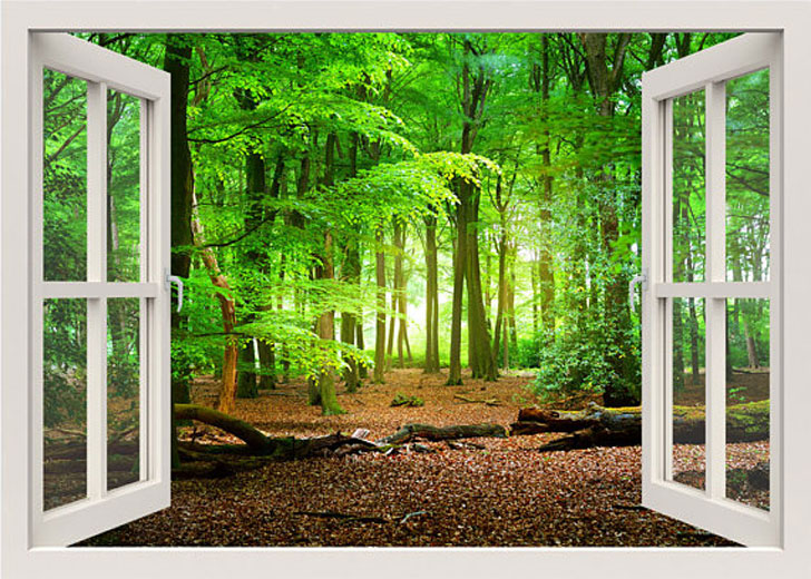Green Forest Window Frame Wall Decals