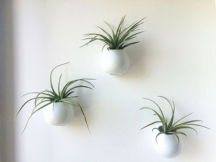Wall Hanging Air Plant Kits