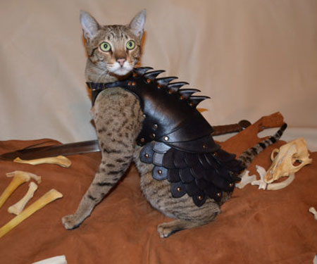 Cat Battle Armour