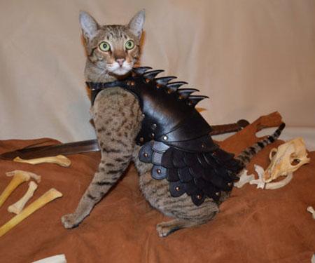 Cat Battle Armour