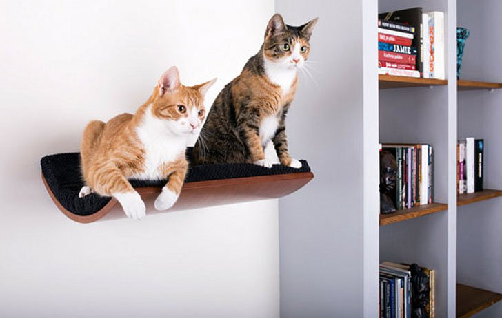 Curved Wall Mount Cat Shelf Bed