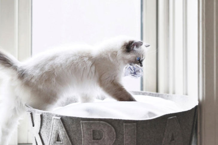 Personalised Designer Cat Beds
