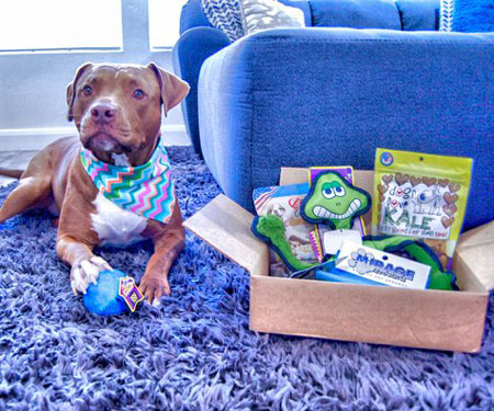 Surprise My Pet Subscription Box