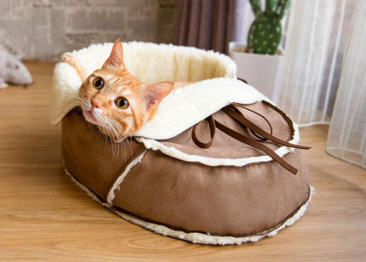 The Designer Shoe Shaped Cat Bed