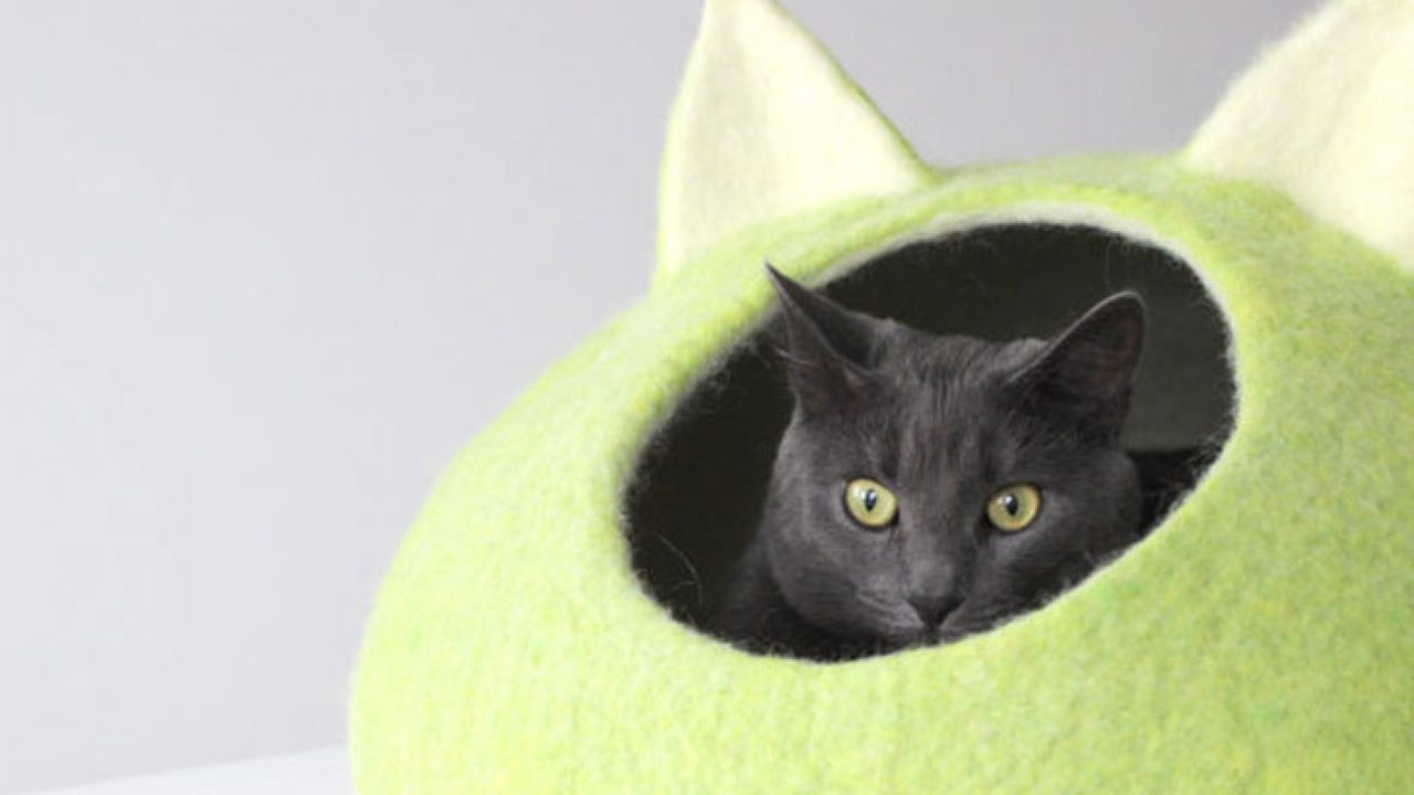 Picture of: 30 Coolest Cat Beds For Your Feline Friend Awesome Stuff 365
