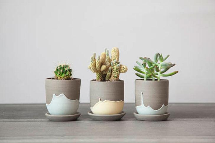 Cactus Pot Planters