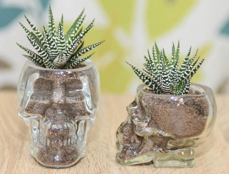 Glass Skull Vase Succulent Terrarium