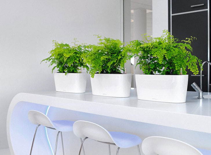 Lichuza Windowsill Planters
